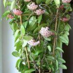 Эти цветы привлекают в дом любовь и счастье. Топ-10 самых необходимых растений!