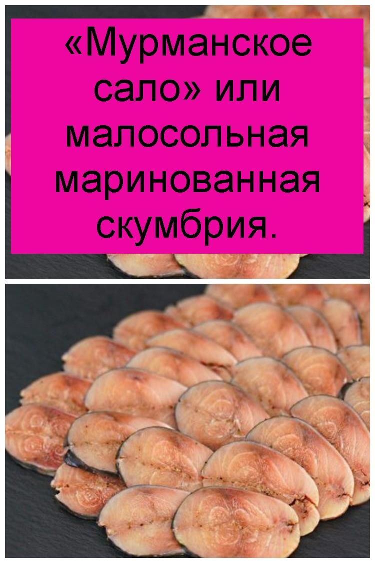 «Мурманское сало» или малосольная маринованная скумбрия 4