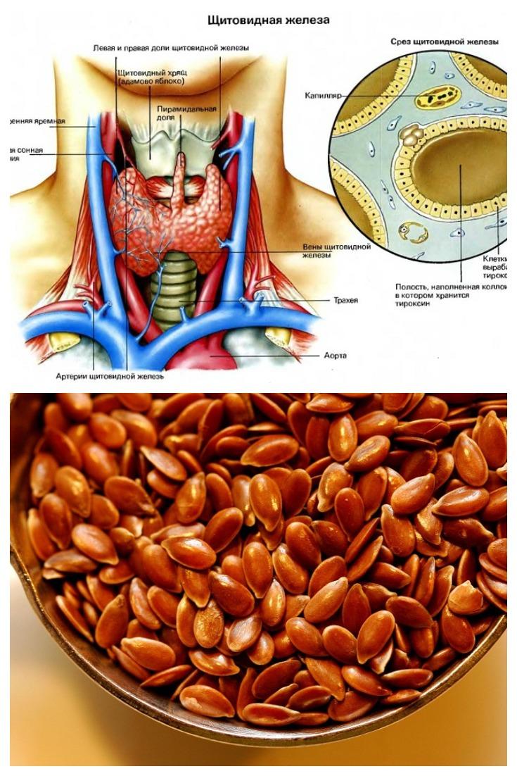 Если шалит щитовидка… 12 чайных ложек этих семян помогут превозмочь болезнь!