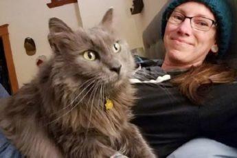 Кот часто уходил гулять и пропадал на долгие часы — однажды он пришел домой с запиской на ошейнике 1