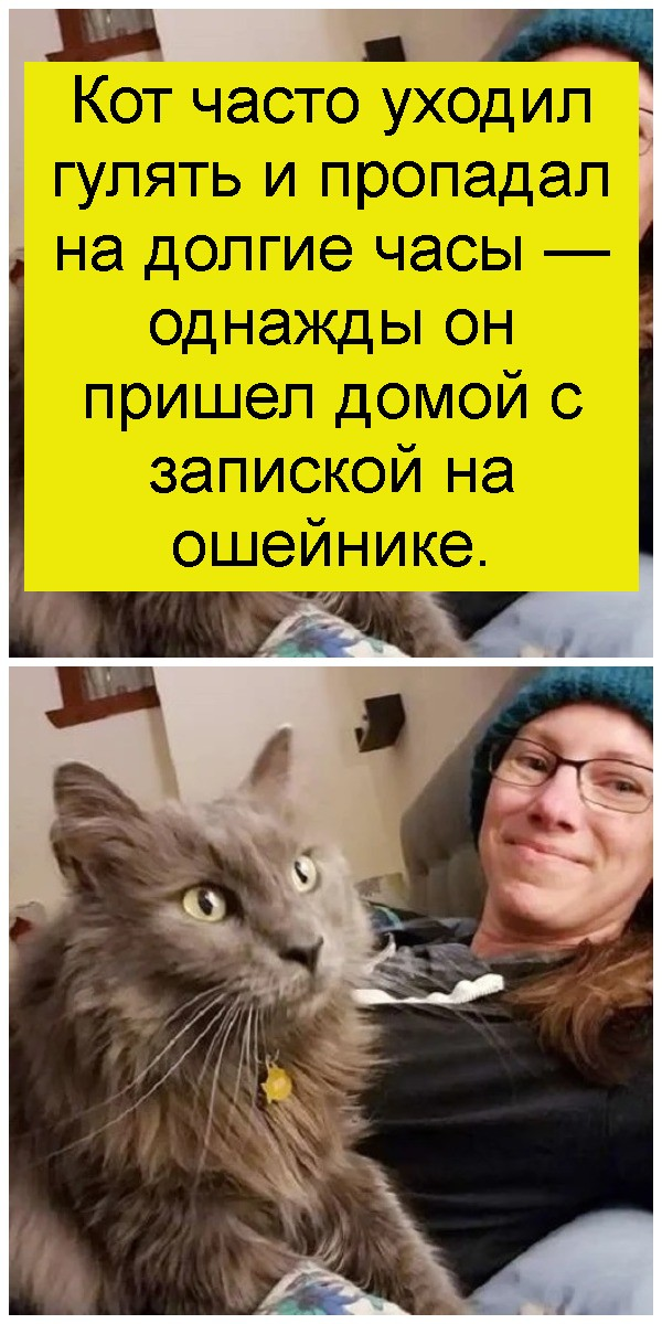 Кот часто уходил гулять и пропадал на долгие часы — однажды он пришел домой с запиской на ошейнике 4